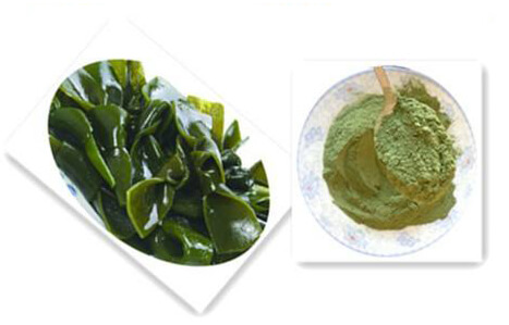 Dried sea lettuce powder