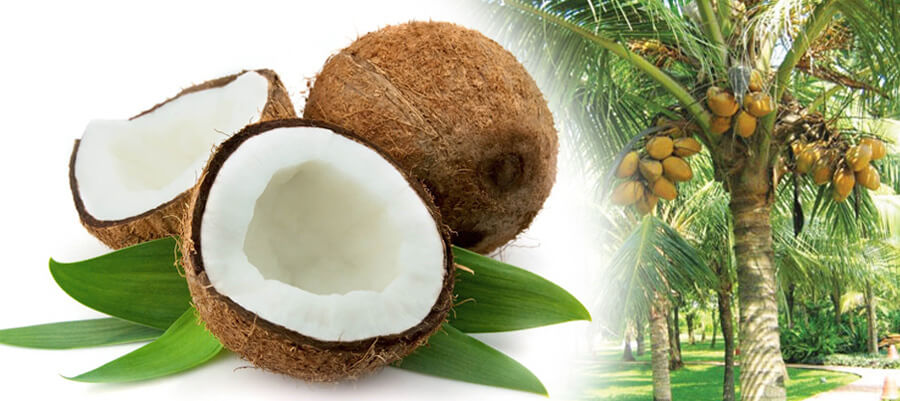 Coconut Comprehensive Processing Insight-How to Process Coconut