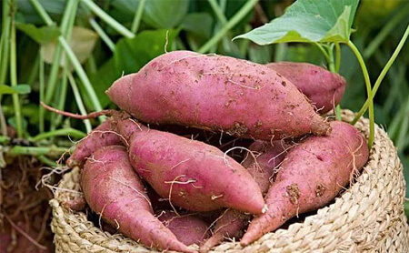 how to make dry sweet potatoes by hot air dryer